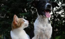 Com chegada do inverno, doenças respiratórias em pets aparecem com maior frequência e exigem muita atenção dos tutores