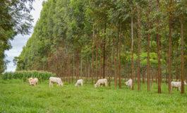 Árvores em sistemas integrados acumulam 8 t de carbono por hectare a cada ano