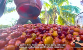 ACESSIBILIDADE: Embrapa disponibiliza documentário sobre os Robustas Amazônicos com audiodescrição, libras e legendas
