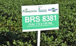 """""""Embrapa segue firme perseguindo a alta produtividade nas variedades de sojas convencionais"""", afirma o chefe-geral da Embrapa Cerrados"""