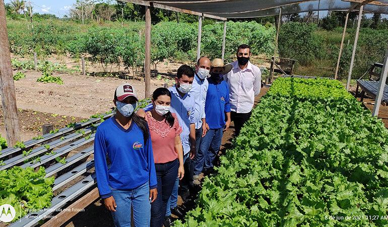 Deputado Ismael Crispin visita plantação de alface cultivado através de hidroponia em Pimenteiras