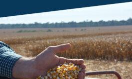 O Valor Bruto da Produção Agropecuária de Rondônia deve ser quase 13% maior em 2021