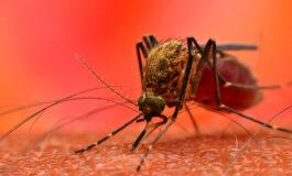 Seis cidades de Rondônia registram surto de dengue em junho de 2021