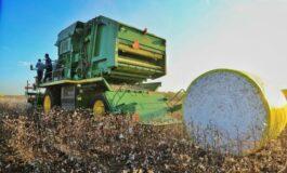 Governo de Rondônia faz abertura da colheita de algodão no Estado; cultura já ocupa cerca de 11 mil hectares