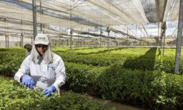 Tecnologia aumenta produtividade da cultura de eucalipto