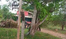 Mulher acorda e encontra homem assassinado no quintal em chácara de Porto Velho